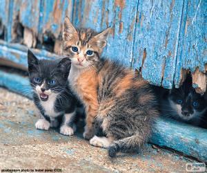 Puzzle Trois chatons