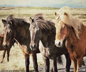 Puzzle Trois chevaux islandais