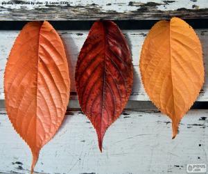 Puzzle Trois feuilles de l'automne