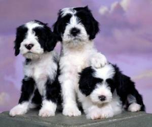 Puzzle Trois magnifiques chiots