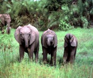 Puzzle trois petits éléphants