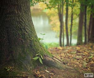 Puzzle Tronc d'arbre