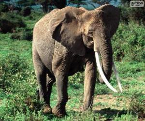 Puzzle Un éléphant avec défenses