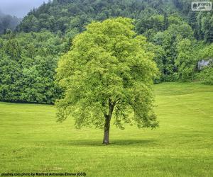Puzzle Un arbre dans la pré
