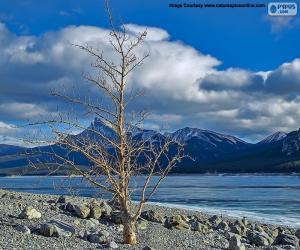 Puzzle Un arbre mort près du lac