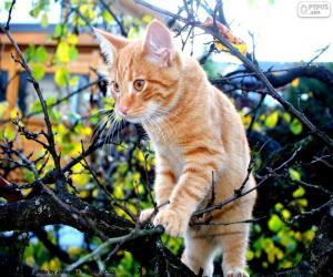Puzzle Un chaton dans un arbre