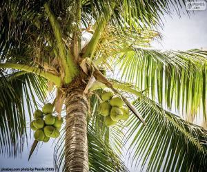 Puzzle Un cocotier