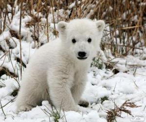 Puzzle Un petit ours