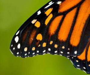 Puzzle Une aile de papillon