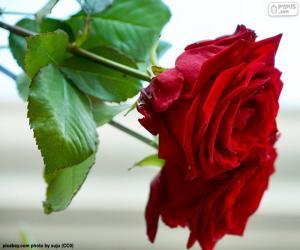 Puzzle Une belle rose