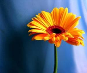 Puzzle Une fleur simple que joli cadeau pour votre mère