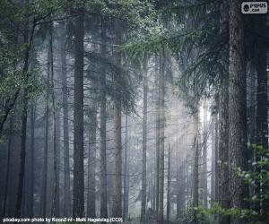 Puzzle Une forêt dense