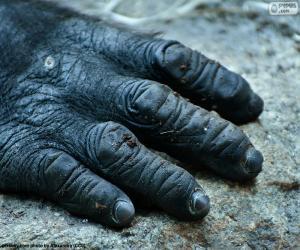 Puzzle Une main de gorille