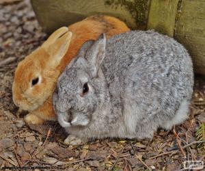 Puzzle Une paire de lapins