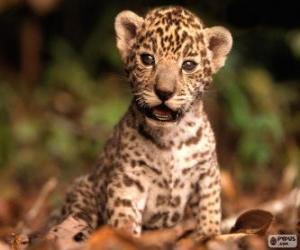 Puzzle Une petite jaguar