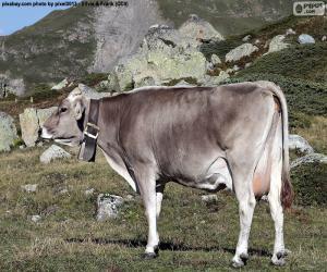 Puzzle Vache en haute montagne