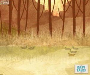 Puzzle Vilain petit canard, natation dans l'étang avec ses frères