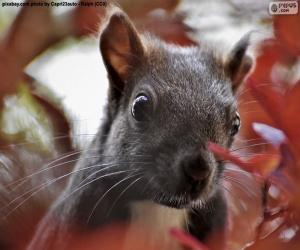 Puzzle Visage d'écureuil