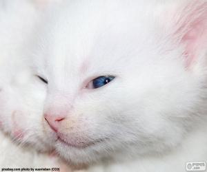 Puzzle Visage de chat blanc
