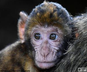 Puzzle Visage de petit singe