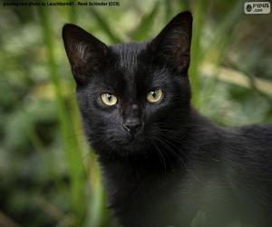 Puzzle Visage noir de chat