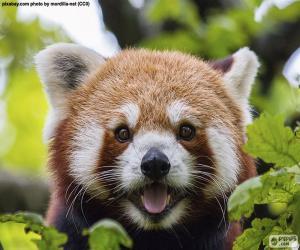 Puzzle Visage panda roux