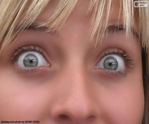 Puzzle Visage yeux clairs