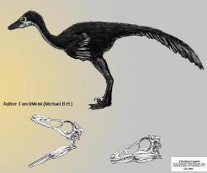 Puzzle Zanabazar est l'un des troodontidés connu plus grand, avec un crâne de 272 mm