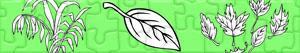 Puzzles de Plantes et Feuilles